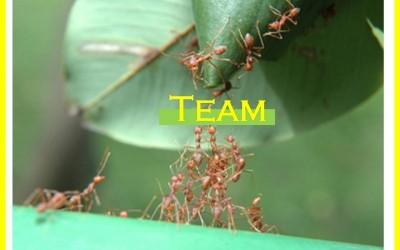 การทำงานเป็นทีมที่มีประสิทธิภาพ